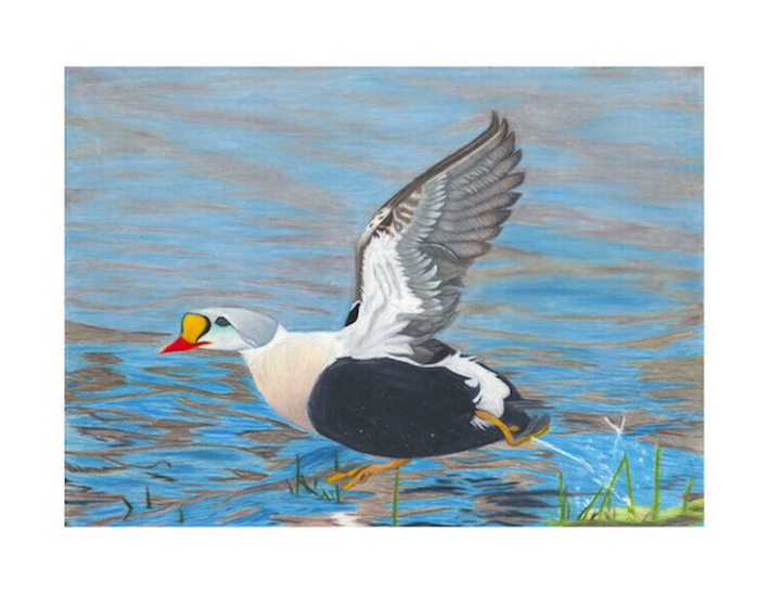 Wyoming Junior Duck Stamp: Design Winners image